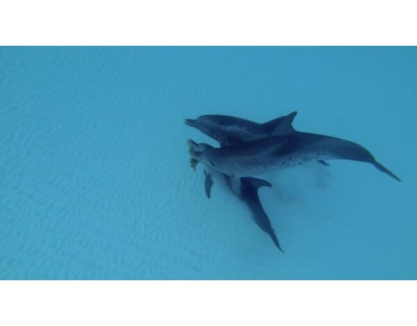 Film TIM FILM STUDIO Delfiny i wieloryby 3D. Plemiona oceanów Dolphins and Whales 3D: Tribes of the Ocean